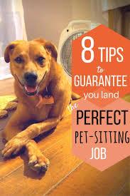sitting jobs best 25 pet sitting jobs ideas on pinterest pet sitting pet