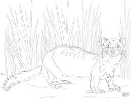 Cute Ferret Coloring Pages Sketch Coloring Page