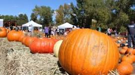 It's that time of year. Fall! Sat & Sun Oct 5th&6th Denver's Pumpkin Festival