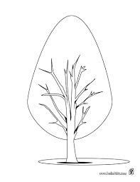 Small Picture Fir tree coloring pages Hellokidscom