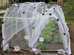 considering all that veggie gardeners in the organic fairfield county ct master gardener demonstration garden have turned to a diy insect netting barrier