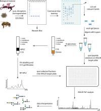 Monoclonal Antibody Nomenclature Chart Drug