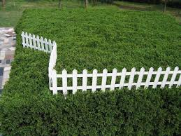 Small Picture Best 25 Plastic garden fencing ideas on Pinterest Chicken fence