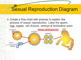 Goal To Compare Sexual And Asexual Reproduction In Animals