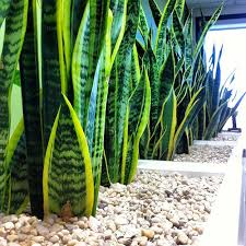 office plants no light. Simple Office Beautiful Office Plants And Office Plants No Light G