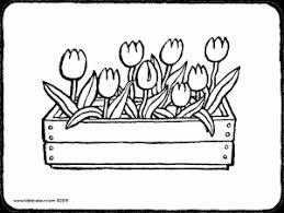 Tulpen In Houten Bloembak Kiddicolour