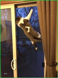 distinguished sliding glass door cat door cat runs into glass door sliding glass doors e d6c1dbe5