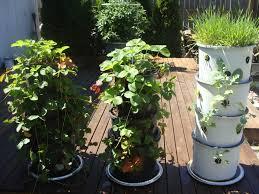 patio garden 9 apt