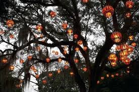 tree lights outdoors