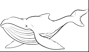 New Free Printable Jonah And The Whale Coloring Pages And And The