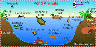 Pond Life Animal Printouts Enchantedlearning Com