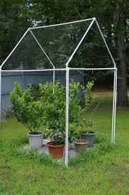 Sabías Que Puedes Cultivar Fruta Sin Tener Un Jardín  Fruit Dwarf Fruit Trees Virginia