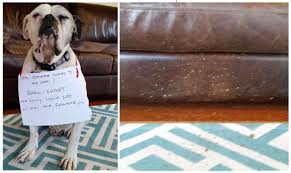 Dog Shame When Someone Comes To The Door I Bark Chart And