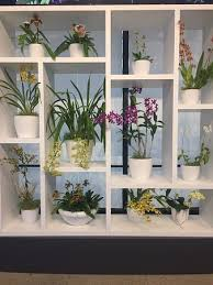 orchid display shelves
