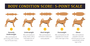 Body Condition Score Chart Underdog Pet Foods Aafco