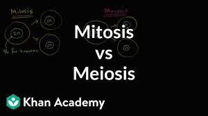 Venn Diagram Comparing Meiosis And Mitosis Comparing Mitosis And Meiosis Video Khan Academy