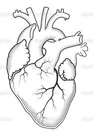 Small Picture The Heart Diagram Coloring Page 5 Human Heart Coloring Page