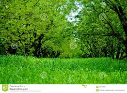 tall green grass field. Green Tamarine Trees And Tall Grass Field O