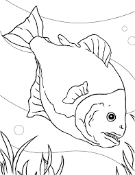 Small Picture Special Fish Tank for Piranha Coloring Page NetArt