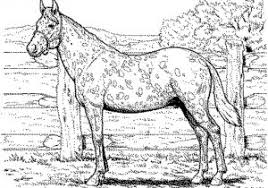 Cool Free Horse Coloring Pages Free Coloring Book