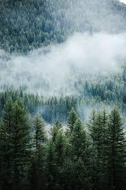 Pine Tree Wallpapers - Top Free Pine ...