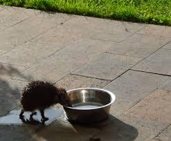 Egels in uw tuin - egelbescherming Nederland