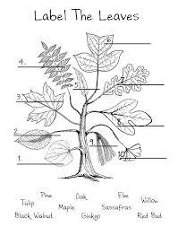 115 best Botany images on Pinterest   Botany, Nature and Science
