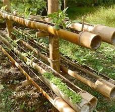 Small Picture 54 best bamboo idea images on Pinterest Landscaping Gardening