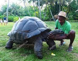 Esmeralda Giant Tortoise Bird Island Stock Photos (Exclusive)   Shutterstock