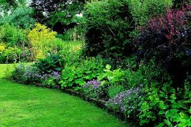 Small Picture Gardening Shade Gardening Shade Garden Ideas