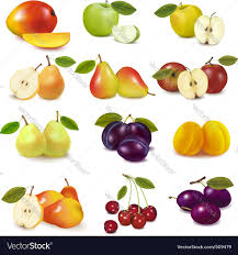 pictures of different fruit.  Different Group With Different Fruits Vector Image For Pictures Of Different Fruit VectorStock