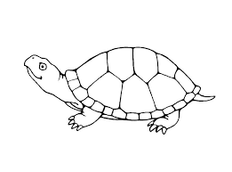 Small Picture Drawn turtle traceable Pencil and in color drawn turtle traceable