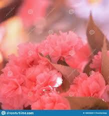 Fashion Aesthetics Pink Flowers. Cherry ...