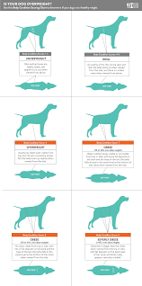 Dog Breed Exercise Chart A Weight Loss Guide For Your Obese Dog Nomnomnow