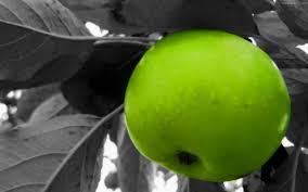 green apple fruit wallpaper. green apple tree background fruit wallpaper