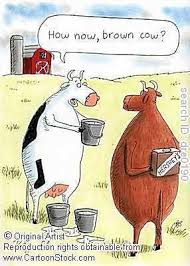 Image result for chocolate milk cow