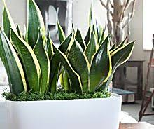 low maintenance office plants. best 25 low maintenance indoor plants ideas on pinterest house and office