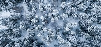 Jan 29, 2021 · ski lake tahoe is the best resource for planning which tahoe ski resort to visit. Lake Tahoe In The Winter