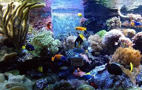 ... Spectacular fish tank seems to contain every possible color and shade!