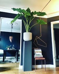 Pflanzen Fur Badezimmer Geeignet Drewkasunic Designs