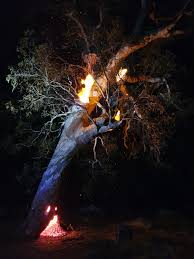 Tree fire in the Adelaide Hills as a ...
