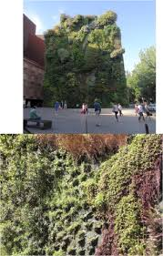 evaluation of green walls as a passive
