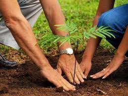 Provinces To Organize Massive Tree Plantation On Plant For Pakistan Day On  Sept 2 - UrduPoint