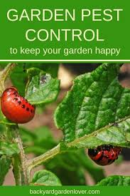is your vegetable garden overtaken with nasty pests and diseases take a look at these natural tips for home garden pest control