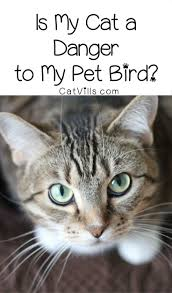 Can cats and birds live together in harmony? Find out just how much a danger