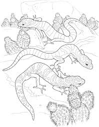 Small Picture Coloring Pages Animals Lizard Coloring Pages Lizard Coloring