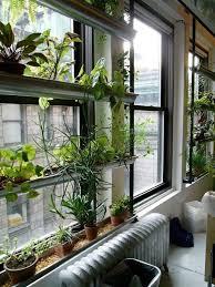 indoor window garden. planttherapy look!: the green screen at ny horticultural society. indoor window gardenwindow garden