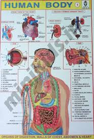 Parts Of The Body Body Parts 2 Chart Number 74