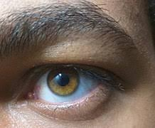 Eye color - Wikipedia