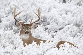 Best Time To Hunt White Tailed Deer Times To Hunt